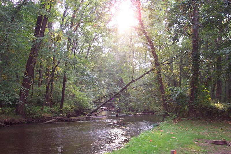 ebyspines-camping-tree